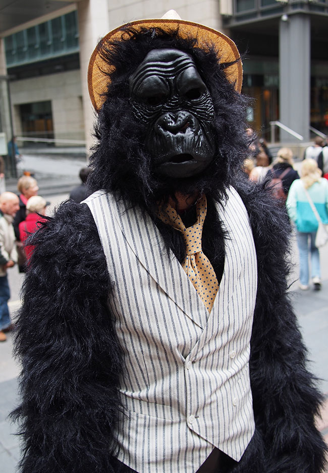 Dapper Gorilla | my husband