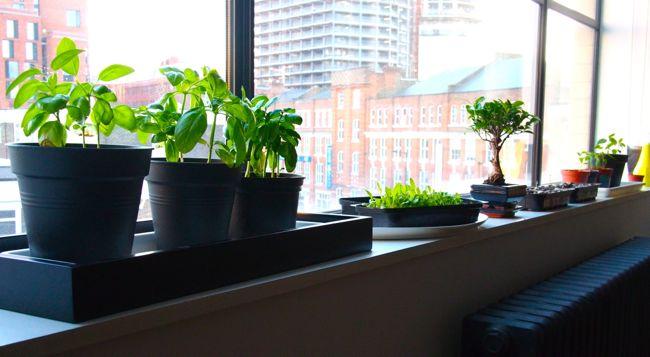 The Windowsill Garden [Part 1]