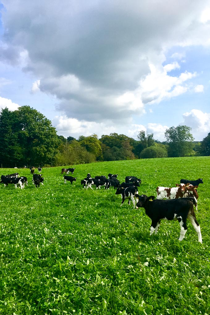 Arla Cockhaise Farm - Free Range Organic Dairy Farm